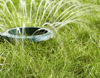 5 Ways to Save Money on Your Yard